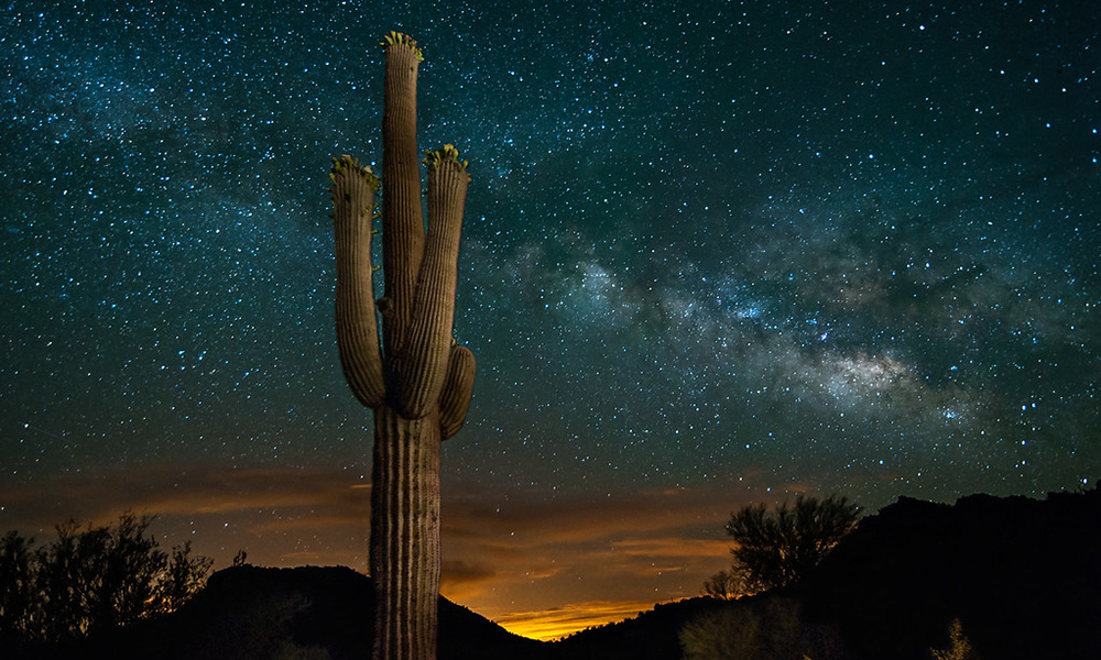 Saguaro cactus against a starry night sky