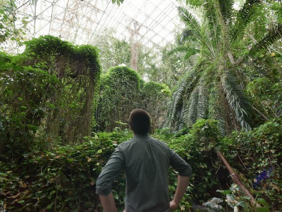 View inside the forest in Biosphere 2 - Our values