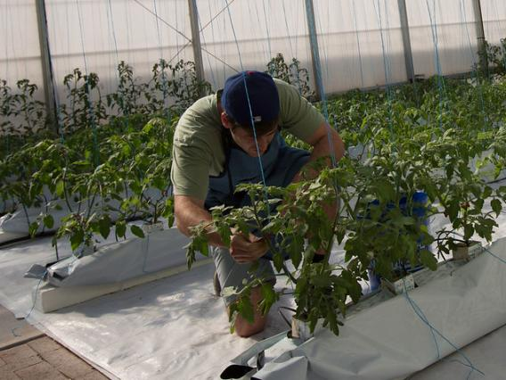 Man tending to plants in a large greenhouse